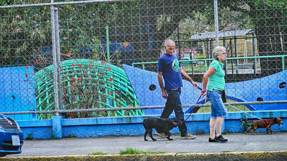 Capturing The Moment Plaza Viquez San Jose, Costa Rica Walking The Dog Turquoise Green Dog Walking Man Woman Dogs