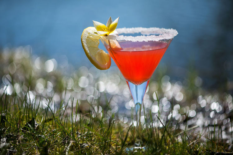 Drink garnished with yellow flower with lemon slice on grassy field