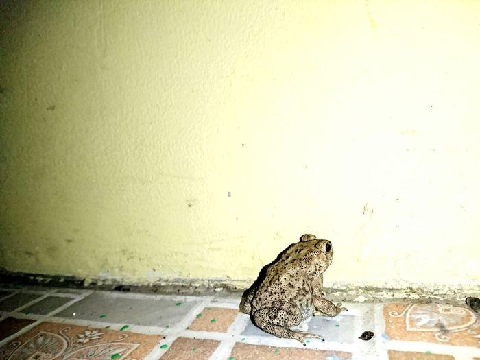 #Kodok #frog
