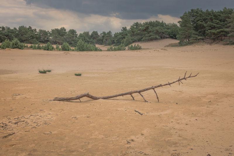 Driftwood on sand on field against sky