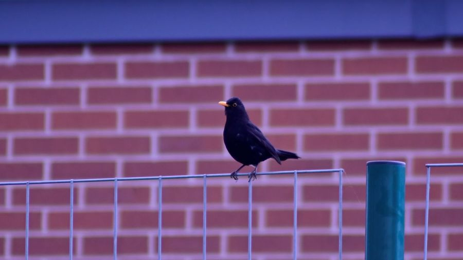Bird perching on fence
