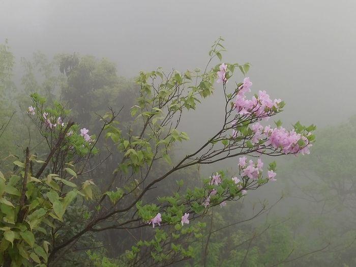 Nature Blossom