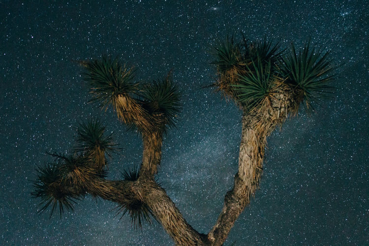 Low angle view of joshua tree against sky