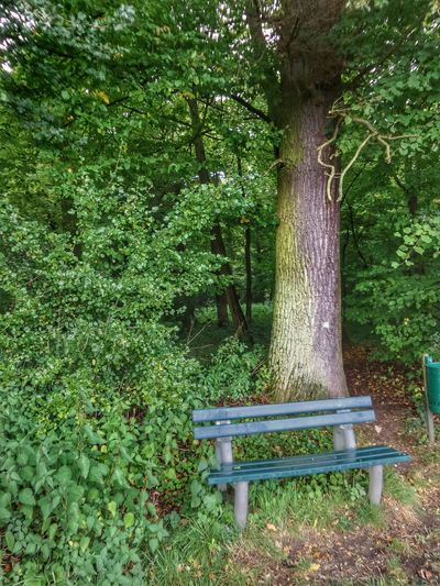 Take A Break Have A Rest Forest Clearing Empty Bench Still Green Autumn Is Coming Gree Trees Green Color Grass Growth Outdoors Day No People Tree Plant Leaf Nature Beauty In Nature Germany🇩🇪 Quiet Moments The Week On EyeEm