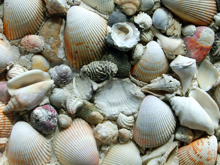 Beach Beachcombing Brain Coral Clams Clamshells Close-up Colorful Conch Coral Day Nature No People Outdoors Sea Life Sea Shells Seashell Arrangement Shells Still Life Vast Quantity