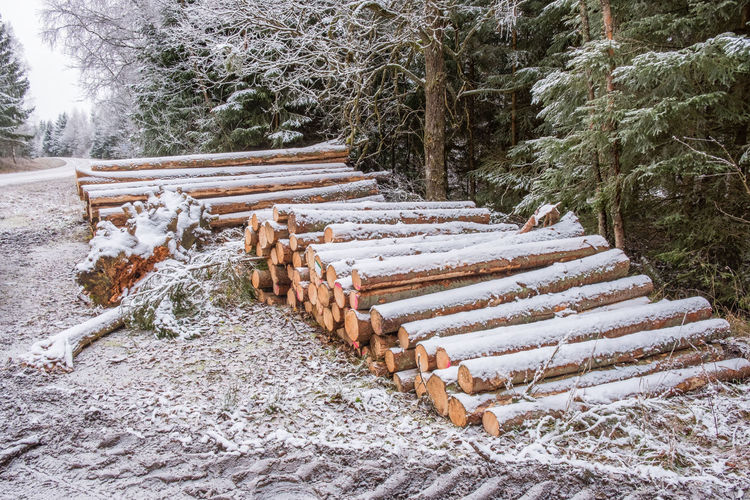 Timber logs along a road in a winter forest