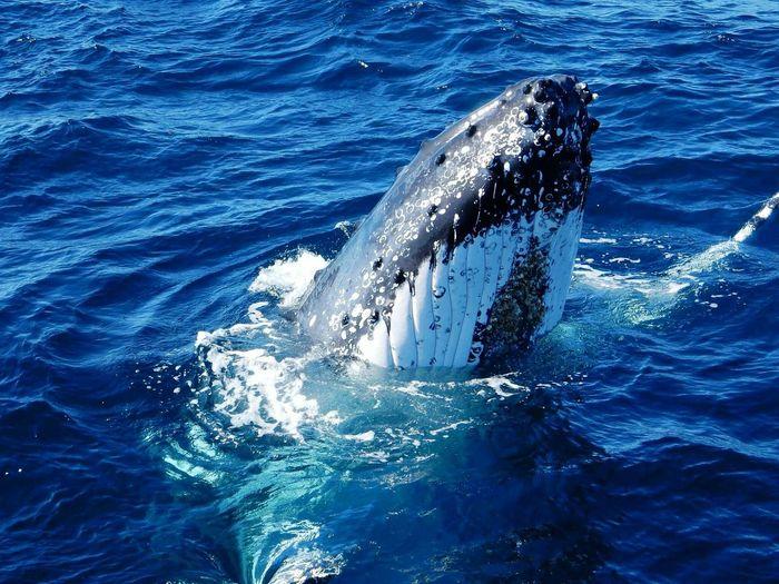 Humpback whale up close
