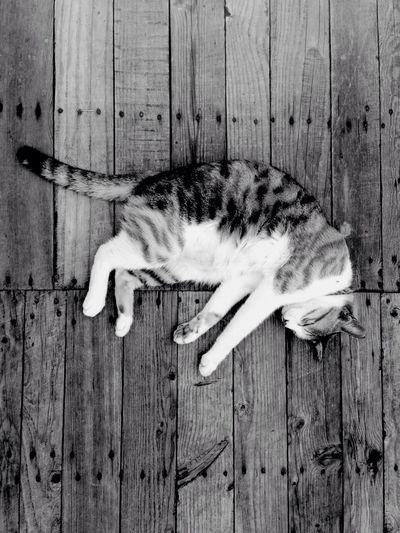Cat sleeping on wooden floor