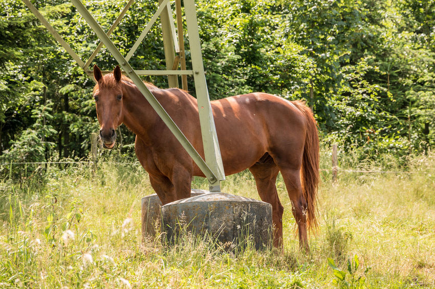 Horses on the green meadow Animal Animal Themes Animal Wildlife Brown Day Domestic Domestic Animals Grass Herbivorous Horse Land Livestock Mammal Nature No People One Animal Outdoors Pets Plant Standing Tree Vertebrate