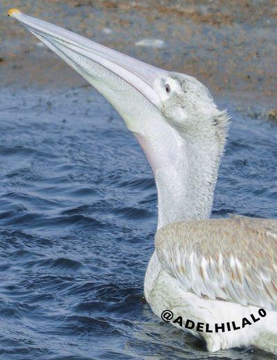 البجع في القنفذة Bird Photography Birds