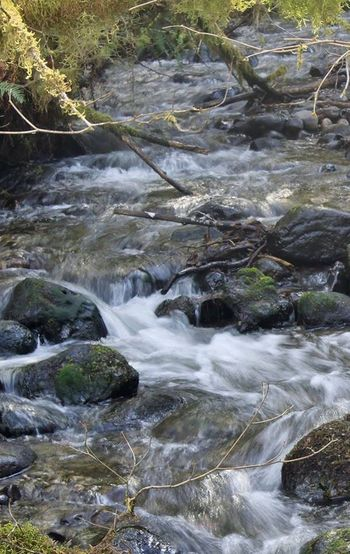 Rushing Stream