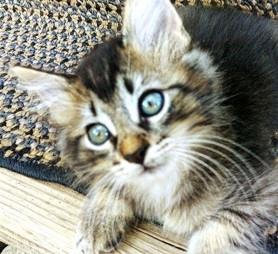 Kittys  Shopkittys Flipsiderestoreation