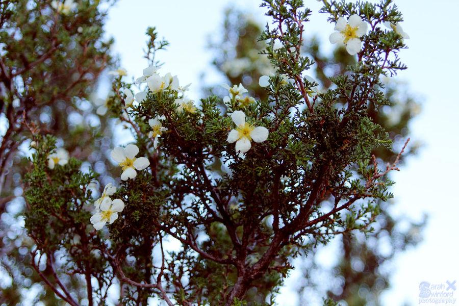 Flowers Small Flowers Delicate Flowers Delicate Plants Beautiful Nature Bokeh Background Bokeh Nature Arizona Nature Delicate Nature Fragility Fragile Beauty