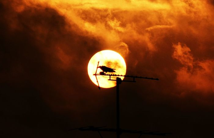 Korea Photos Clouds And Sky Bird Sunset Silhouettes Streamzoofamily