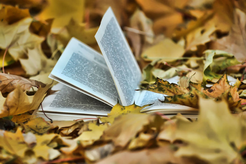 Close-up of bible on autumn leaves