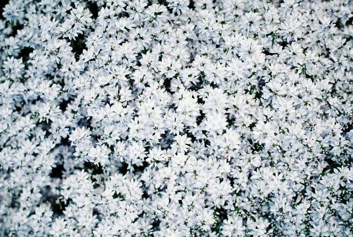 White Black And White Photography White Album Analog Ishootfilm Kodakgold200