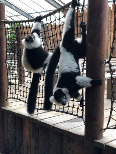 View of cats in cage