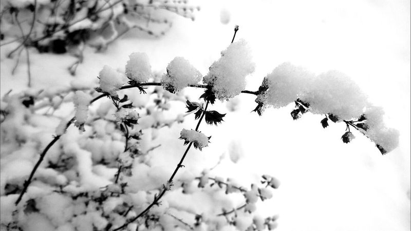 Ice Age Growth Branch Beauty In Nature Tree White Color Close-up Focus On Foreground Nature Plant Fragility Day Freshness Flower Sky Springtime Scenics No People Tranquility Growing Tranquil Scene Snow Selective Focus Season  Outdoor Photography