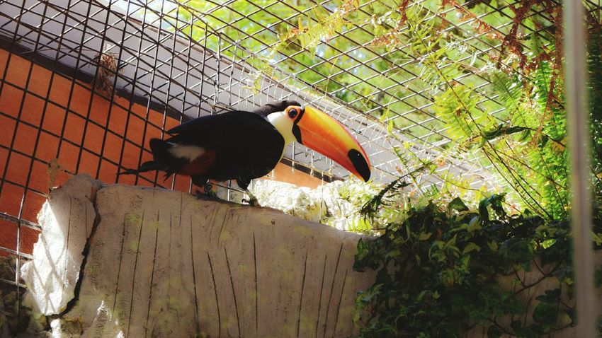 Animal Themes Bird Animals In The Wild Wildlife One Animal Outdoors Zoology Day Nature Tranquility Zoo Beauty In Nature Tucan Vibrant Color