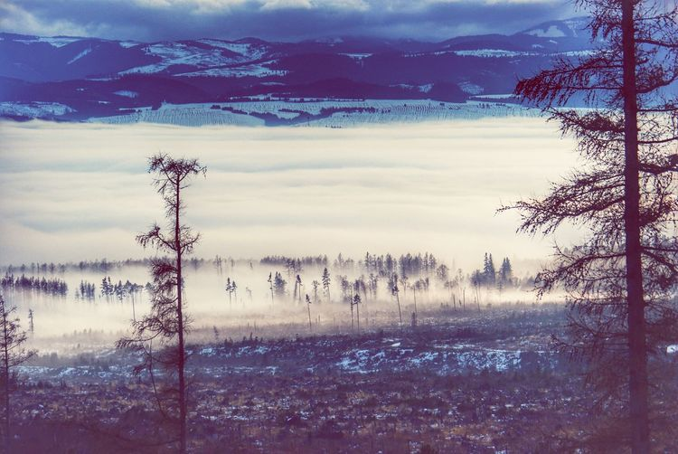 Landscapes With WhiteWall Winter Landscape Landscape Winter Winter Scenery Tatra Mountains Slovakia Snow Mountains Landscape Layers Layers Fog Larch Larch Tree Larches