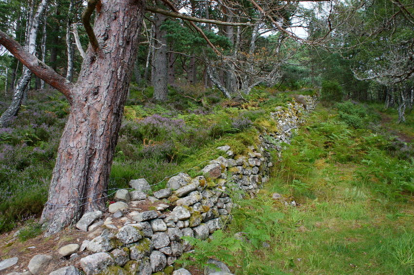 Into the Woods Beauty In Nature Day Europe Grass Growth Highlands Holidays Loch An Eilein Nature No People Outdoors Scotland Tranquil Scene Tranquility Traveling Tree Tree Trunk Uk Wall Wood