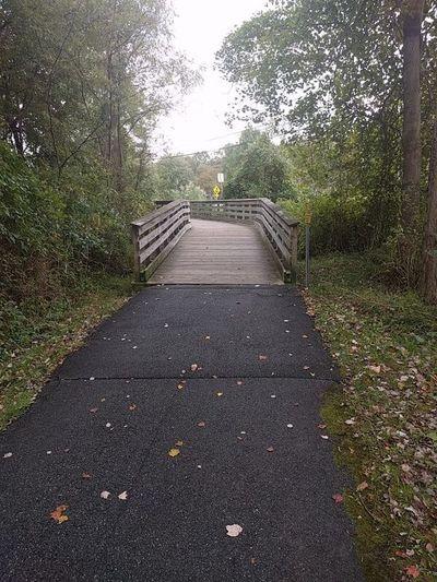 Waking Fall Sports Walking Pennsylvania Hockessin Plant Tree Nature Green Color Park Road