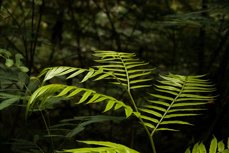 Close-up of fresh green leaves on land in forest