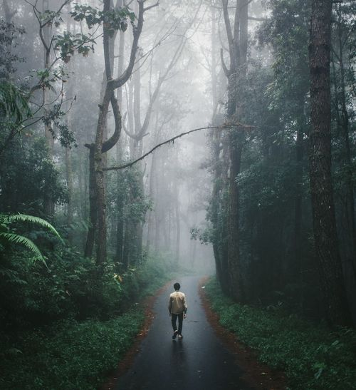 Rear view of man walking on road amidst trees during foggy weather