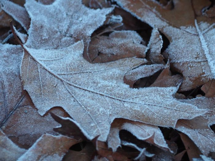 Autumn Backgrounds Beauty In Nature Change Close-up Day Fragility Full Frame Leaf Leaves Nature No People Oak Oak Leaf Outdoors