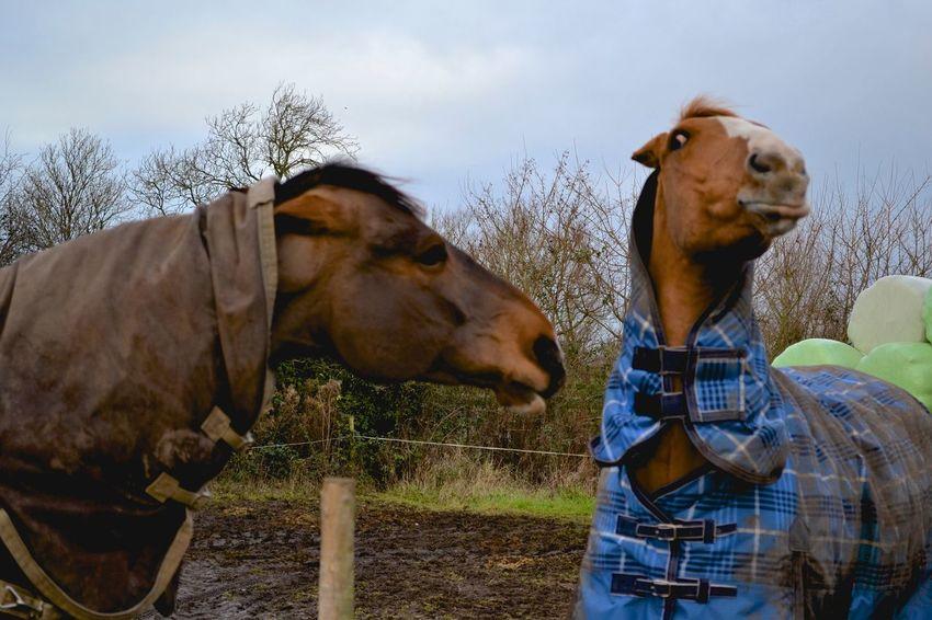 Cheese! I love horses Tiff