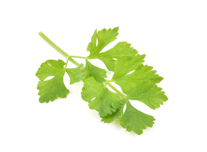 Celery White