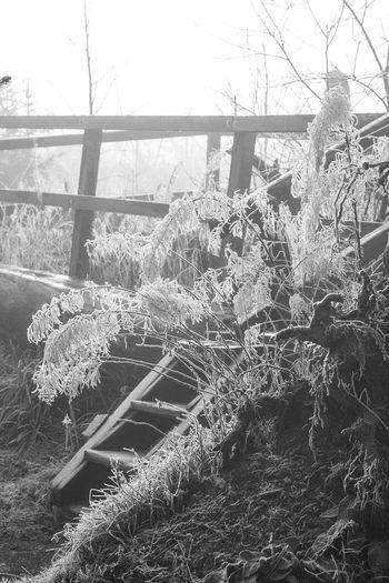 Kyrillpfad 2015 Baum Eis Frost Kyrill Nature Schmallenberg Wald Wege Winter