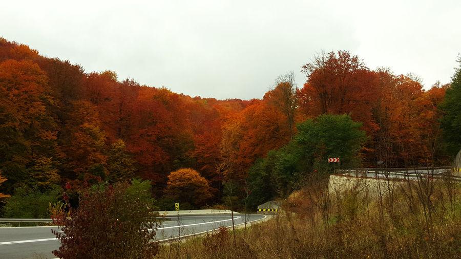 Autumn Colors Fire Forest Naturebeauty Outdoors Roadtrip Tree