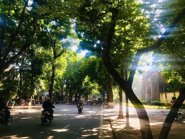 Tree Plant City Transportation Mode Of Transportation Nature Street City Life Sunlight Road