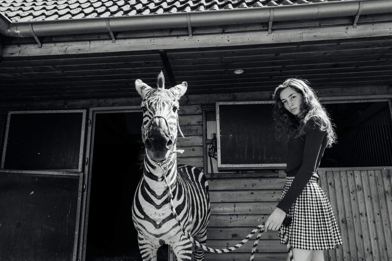 Portrait of young woman standing by zebra