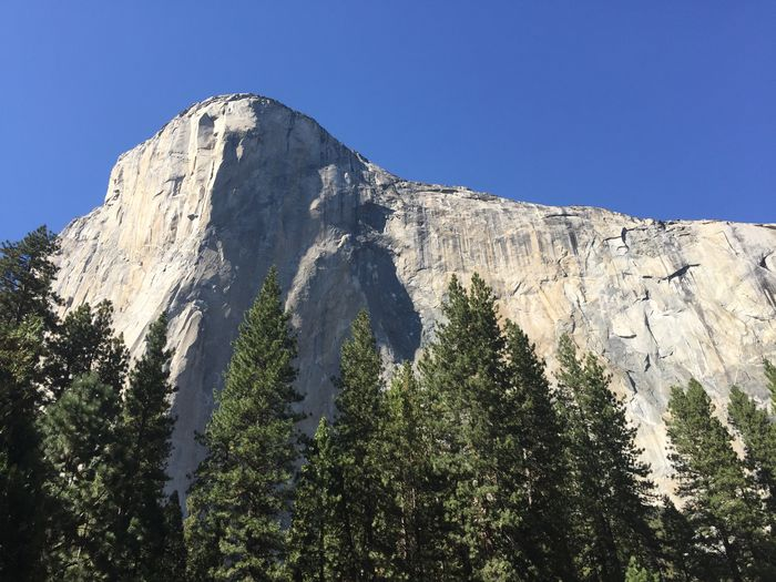 Sky Mountain Beauty In Nature Clear Sky Plant Tree Nature Scenics - Nature Mountain Range Low Angle View Tranquil Scene Rock No People Tranquility Day Non-urban Scene Mountain Peak Growth Land Sunlight Outdoors Formation El Capitan Yosemite National Park