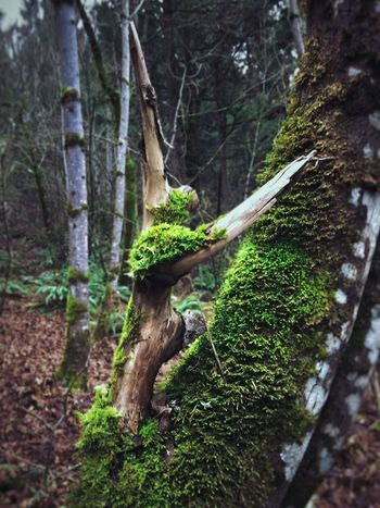 Tree Trunk Nature Forest Tranquility WoodLand Tree Beauty In Nature Outdoors Close-up Branch Knotted Wood Abstract Nature View Shapes In Nature  Perspective Landscape Abstractions Layers And Textures Scenics Dancer Shaped Parts Textured  Weathered Lush Foliage