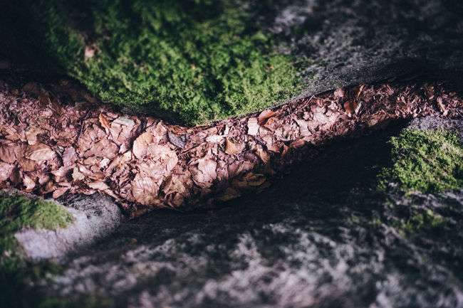 Selective Focus Close-up No People Plant Tree Nature Textured  Moss Rock Tree Trunk Day Solid Rock - Object High Angle View Trunk Outdoors Plant Part Rough Leaf Wood - Material