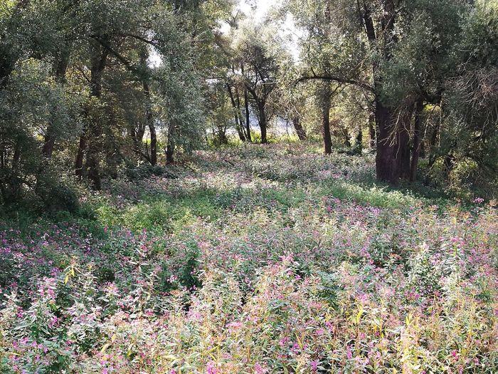 Tree Men Flower Field Grass Plant Flower Head Pollen Dahlia Pink Hibiscus Passion Flower Rosé