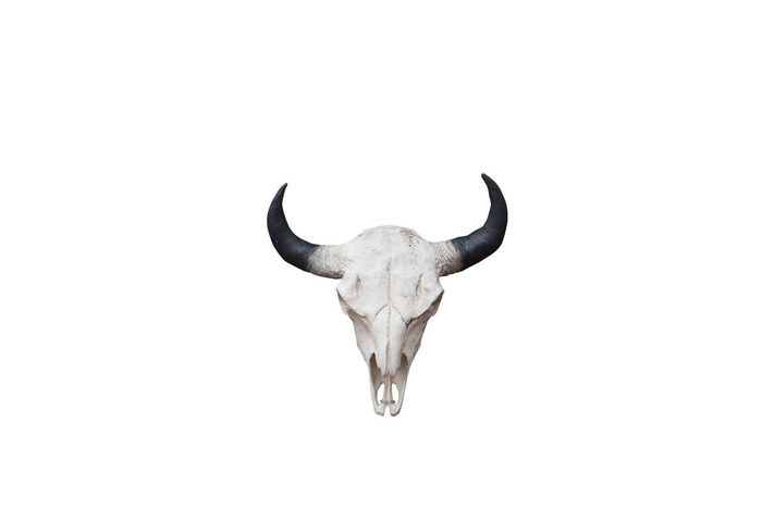 Skull isolated on white Bones Copy Space Isolated Animal Themes Bufallo Cow Skull Helloween Horned Horned Animals Isolated White Background Mammal Nature No People Old One Animal Outdoors Skull Text Space