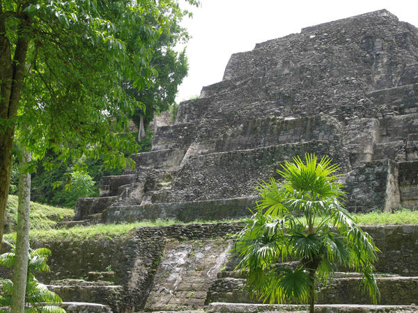 Mayan structures and pyramids in Yaxhá, Petén, Guatemala Ancient Ancient Civilization Archaeological Sites Archaeology Green Color Guatemala History History Architecture Jungle Jungle Plants Jungle Trecking Laguna Yaxha Maya Mayan Mayan Ruins Nature Nature_collection No People Outdoors Outdoors Photograpghy  Peten Rain Forest Travel Destinations Travel Photography Wilderness