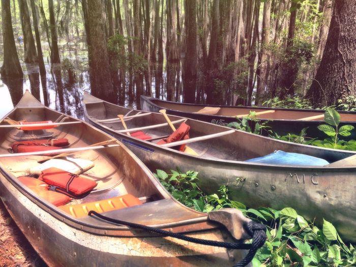 Caddo Lake Canoes Lakes  Nature Canoeing