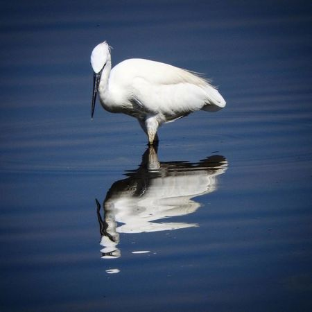 Animal Wildlife Bird Reflection Animals In The Wild Water One Animal Flamingo Lake Full Length Nature Great Egret No People Foraging Outdoors Ibis Day Portrait Animal Themes Close-up Sky Landscape Travel Photography Lake View Travel Destinations Silhouette Live For The Story The Great Outdoors - 2017 EyeEm Awards The Street Photographer - 2017 EyeEm Awards Out Of The Box Place Of Heart EyeEmNewHere Perspectives On Nature Be. Ready.