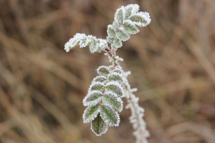 Beauty In Nature Close-up Cold Temperature Freshness Growth Nature No People Outdoors Plant Växjö  Sweden