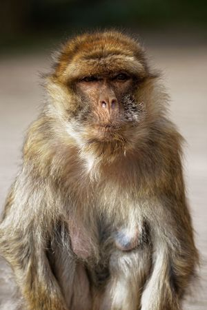 Who Cares Primate Mammal One Animal Animal Wildlife Vertebrate No People