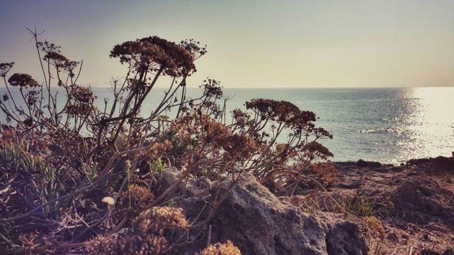 Instagood Instadaily Beautiful Italy Instaitalia Italy Art Modernart Puglia Sunday Sun Streetart Streetphotography Sea Beach Followforfollow Instagood South Sun Holiday Trip Picoftheday Photooftheday Landscape Citylandscape