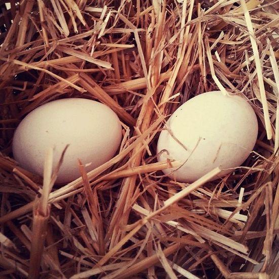 Köy Yumurtası Pazar Kahvaltı Saman