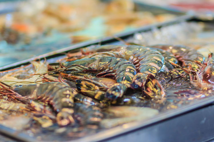 Extra large size of Penaeus monodon, commonly known as the giant tiger prawn or Asian tiger shrimp is a marine crustacean that is widely reared for food. Tiger prawns for sale at the seafood market. Asian Tiger Shrimp Penaeus Penaeus Monodon Tiger Prawn Tiger Shrimps Animal Close-up Crustacean Fish Fish Market Fishing Industry Food Food And Drink For Sale Freshness Giant Tiger Giant Tiger Prawn Healthy Eating Indoors  Market Market Stall No People Raw Food Retail  Sale Seafood Selective Focus Still Life Tiger Prawns Tiger Shrimp Tray Vertebrate Wellbeing
