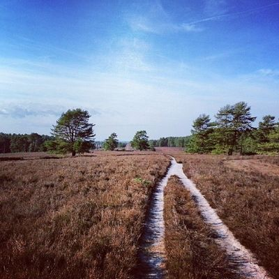 Heidefläche bei Misselhorn I