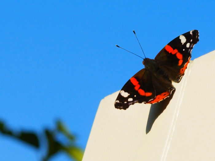 Close-up of butterfly on leaf against blue sky